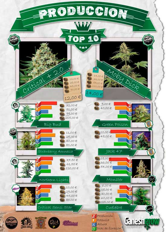 TOP-10-semillas-marihuana-produccion.jpg