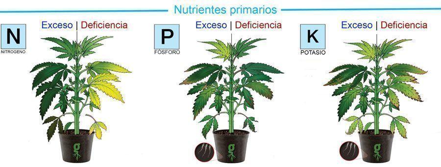 Nutrientes primarios