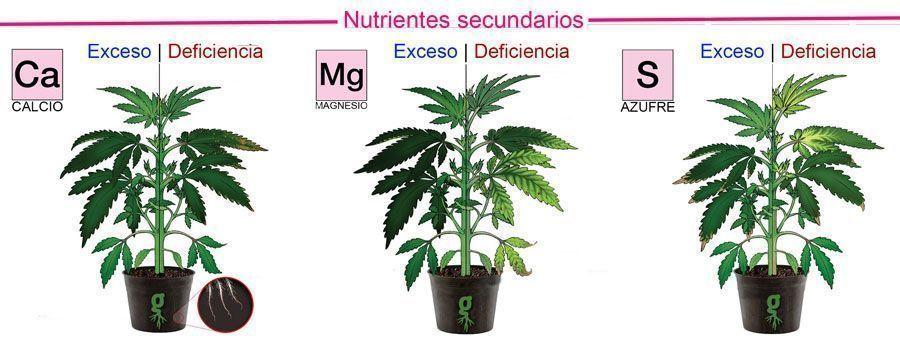 Nutrientes secundarios