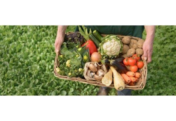 PRODUCTOS PERMITIDOS EN AGRICULTURA ECOLÓGICA Y OTROS DETALLES A CONSIDERAR