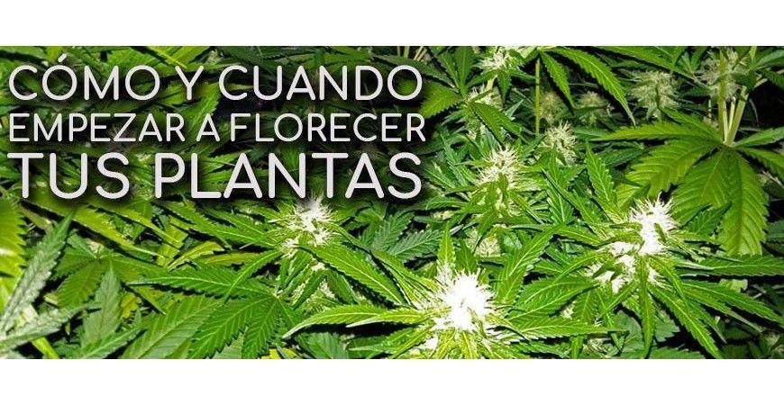 CÓMO Y CUANDO EMPEZAR A FLORECER TUS PLANTAS