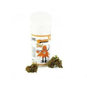 COGOLLOS DE MARIHUANA ORANGE BUD