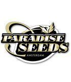 SEMILLAS REGULARES PARADISE SEEDS