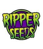 SEMILLAS RIPPER SEEDS