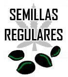 SEMILLAS MARIHUANA REGULARES