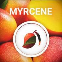 Mirceno, el terpeno presente en el mango y lúpulo