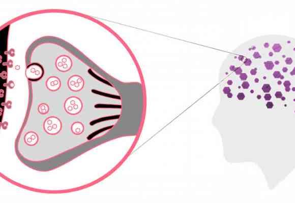 CBD (Cannabidiol): ¿Qué hace y cómo afecta el cerebro y el cuerpo?