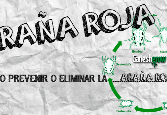 ARAÑA ROJA | COMO PREVENIR Y ELIMINAR