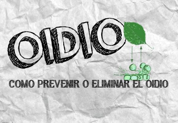 OIDIO | COMO PREVENIR Y ELIMINAR
