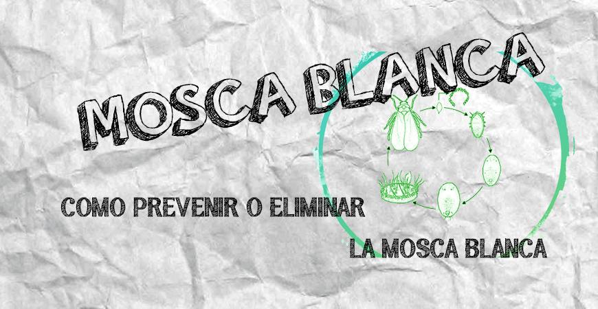 MOSCA BLANCA EN TU CULTIVO | COMO PREVENIR Y ELIMINAR LA MOSCA BLANCA