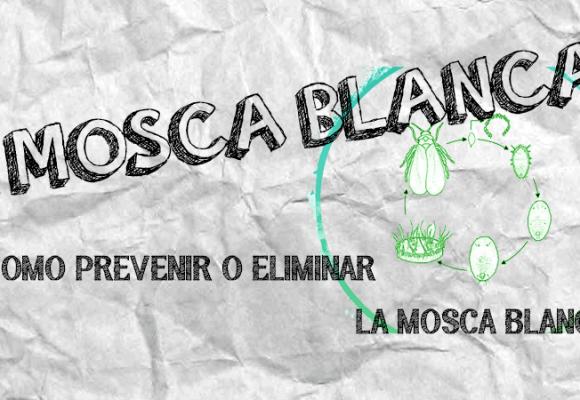 MOSCA BLANCA | COMO PREVENIR Y ELIMINAR