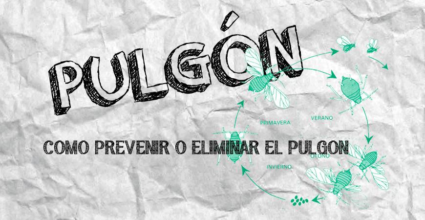 PULGONES EN TU CULTIVO | COMO PREVENIR Y ELIMINAR LOS PULGONES