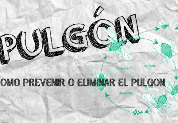 PULGONES | COMO PREVENIR Y ELIMINAR