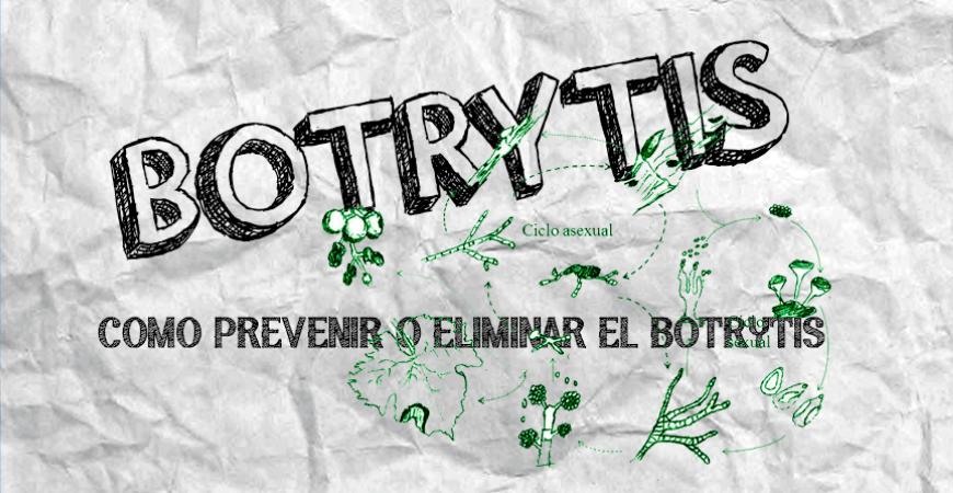 BOTRYTIS EN TU CULTIVO | COMO PREVENIR Y ELIMINAR LA BOTRITYS