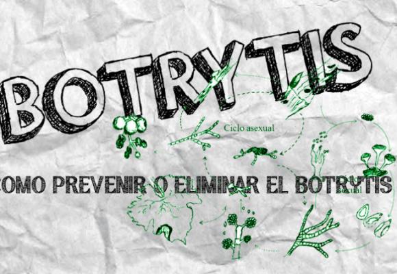 BOTRYTIS | COMO PREVENIR Y ELIMINAR