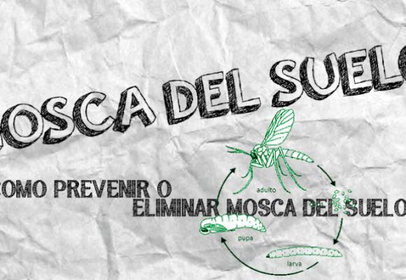 MOSCA DEL SUELO| COMO PREVENIR Y ELIMINAR