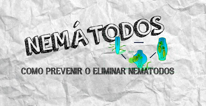 NEMATODOS EN TU CULTIVO   COMO PREVENIR Y ELIMINAR LOS NEMATODOS