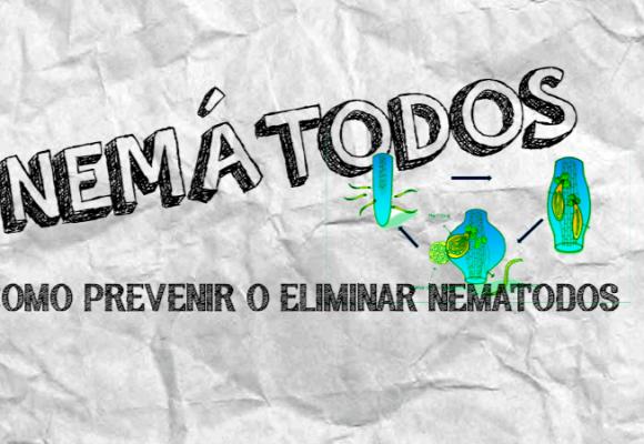 NEMATODOS EN TU CULTIVO | COMO PREVENIR Y ELIMINAR LOS NEMATODOS