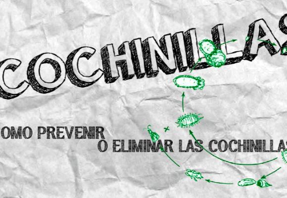 COCHINILLAS | COMO PREVENIR Y ELIMINAR